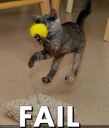 A cat gets smacked in the face with a tennis ball on a spring